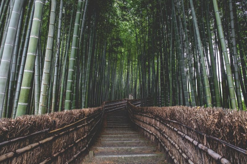 calm bamboo forest