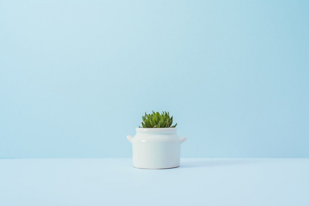 green plant in a white pot with blue background